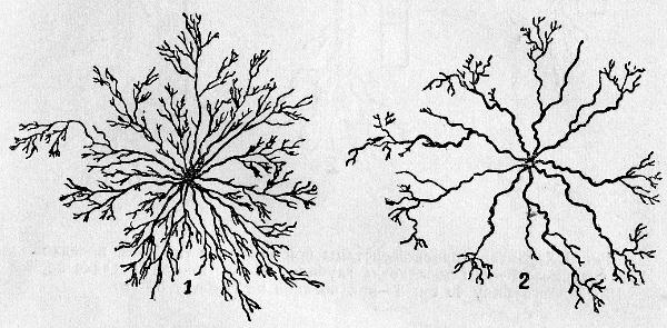 06-stroenie-kornevoi-sistemi7