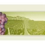 Виноградолечение и винолечение