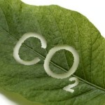 Влияние углекислоты воздуха на виноград