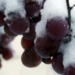 Борьба с осенними заморозками в Крыму