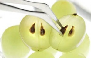Open Grape With Forceps Grabbing Seed