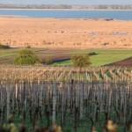 Влияние почвенных условий на виноградное растение