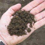 Значение структуры почвы при выращивании винограда в Крыму