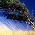Влияние ветра на виноград