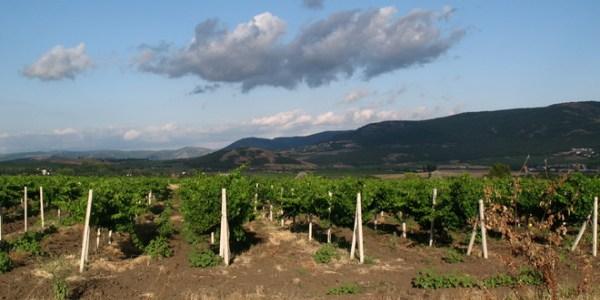 vinograd-balaklava