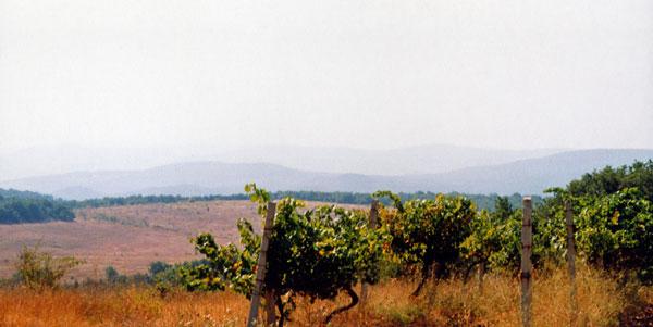 vinograd_b
