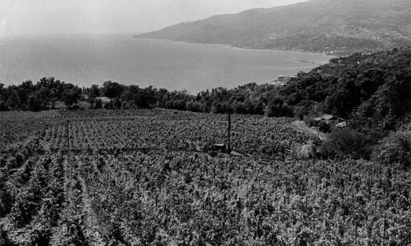 vinogradniki-staroe-foto-kr
