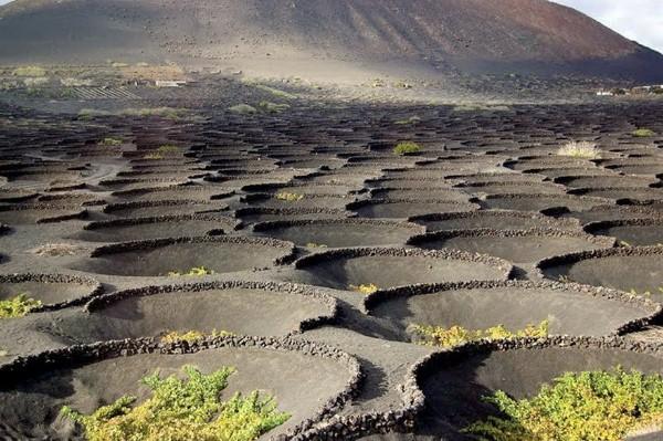 vulkanicheskii-vinograd1