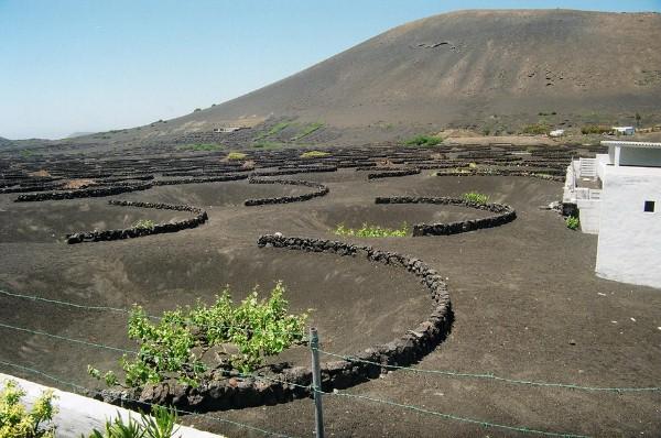 vulkanicheskii-vinograd12
