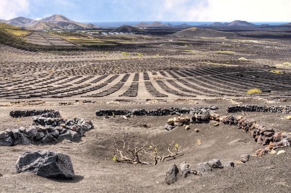 vulkanicheskii-vinograd14