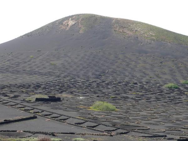 vulkanicheskii-vinograd6