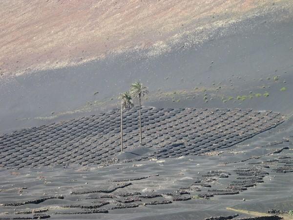 vulkanicheskii-vinograd7