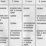 Организация территории питомника