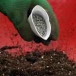 Подкормка растений в питомнике