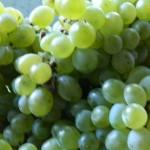 Сорт винограда Пухляковский
