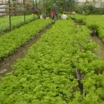 Контроль за качеством посадки и уходом за растениями в питомнике