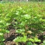 Уход за растениями в питомнике