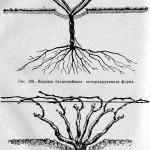 Веерная многорукавная форма без надземного штамба