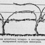 Веерная форма с надземным штамбом