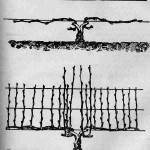 Шпалерная двухрукавная форма