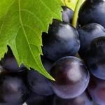 Сортировка столового винограда