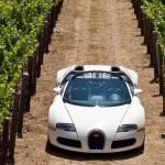 Машины для борьбы с болезнями и вредителями винограда
