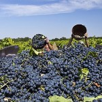 Крымские виноделы объединились