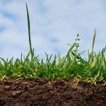 Влияние различной степени увлажненности почвы на рост и плодоношение винограда
