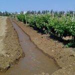 Содержание почвы на орошаемых виноградниках