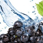 Особенности техники полива виноградников