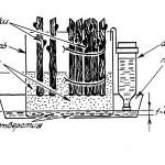 Кильчевание привитых черенков в пластмассовых емкостях