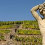 Греция — колыбель виноградарства