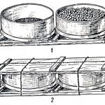 Сбор и упаковка винограда в решета