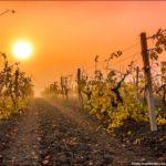Три способа укрытия винограда на зиму