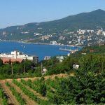 Благодаря государственной поддержке в этом году «Массандра» заложит 145 гектаров виноградников