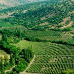 Итальянский эксперт высоко оценил крымские вина